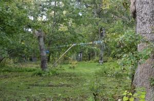 Längst ned i trädgården ligger det gamla trädgårdskjulet