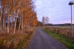 En morgonpromenad i oktober utefter vår egen byväg, snart kommer björkarna att vara kala och snön täcka marken och nyss var det sommar.