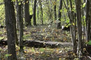 """Det träd som föll i fjol, på några år förvandlas det till mull, det kallas """"kretslopp"""""""