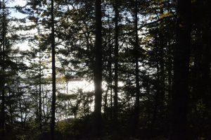 Jag hann med en promenad runt den lilla ö där vi skakade näten
